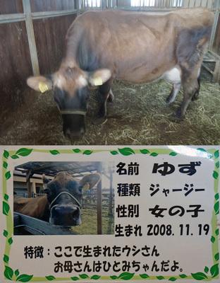 01DSC06939-yuzu.jpg